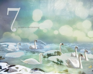 07 swans a swimming